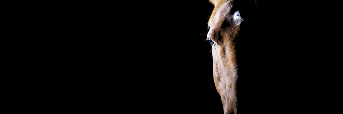 Equine Photography By St. Albans Photography